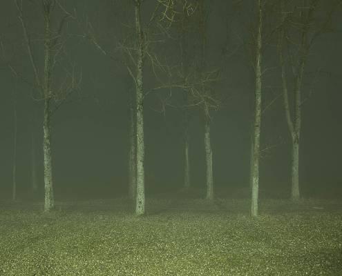 arbres avec une lumière étrange