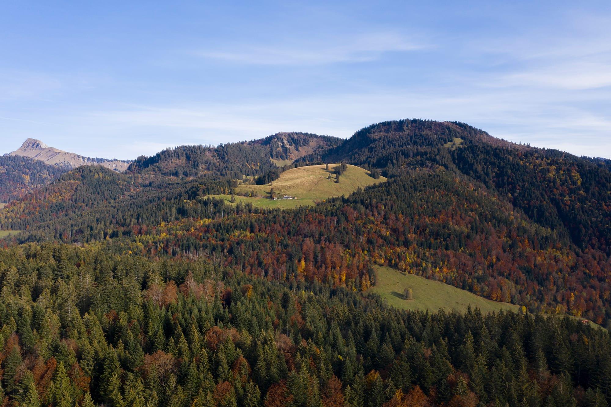 forêt sur les Préalpes