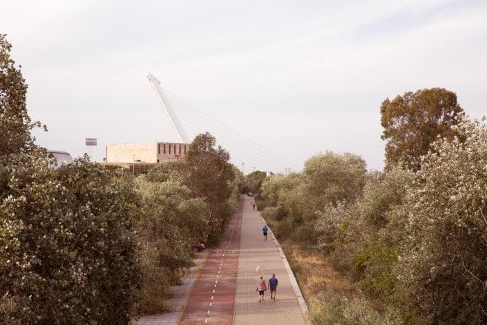 piste piétonne entourée d'arbres