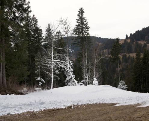 arbre avec de la neige sur les branches
